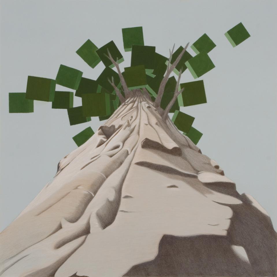 Sequoia Mandala